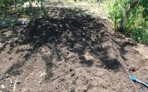 Что внести в почву перед посадкой клубники