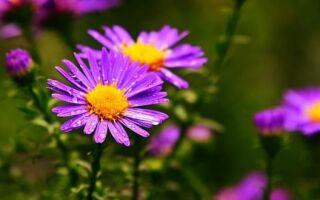 Чем подкормить рассаду клубники из семян в домашних условиях