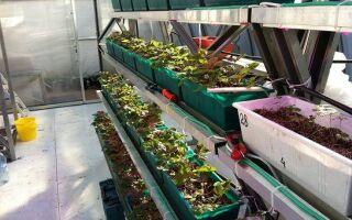 Строительство теплицы для выращивания клубники