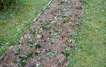 Укрытие клубники на зиму в сибири