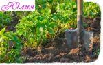 Выращивание клубники в ростовской области