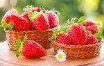 Как вырастить крупную клубнику на даче
