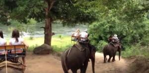 Часто экскурсии в Таиланде включают катание на слонах