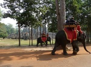 Прогулка на слонах возле храма Ангкор-Ват