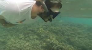С трубкой и маской можно на мелководьи осмотреть богатства подводногомира