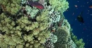 В Красном море кораллы очень красивые