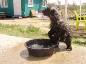 Медвеженок в Счастливцево
